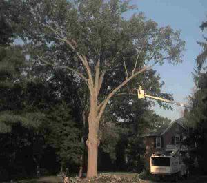 tree crew at work