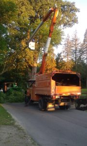 Our crew at work trimming a tree near Fort Wayne